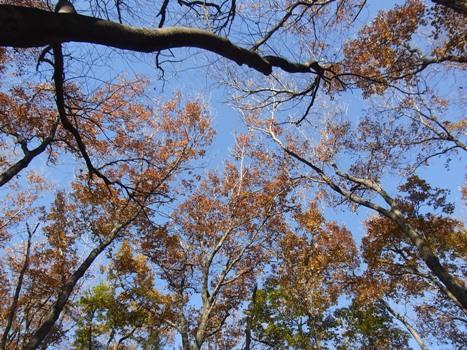「秋葉の森~林冠・池」