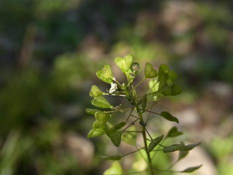 「草木の花〈1月12日〉アレコレ(2)」