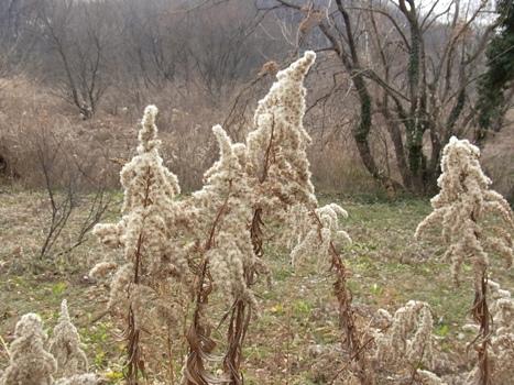 「北本植物景色~1月25日(2)」
