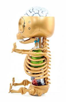 gummibear-anatomy-19.jpg