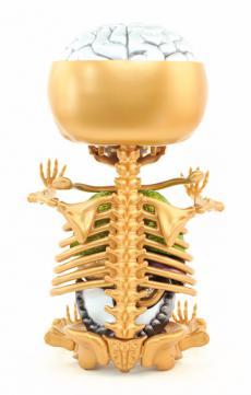 gummibear-anatomy-23.jpg