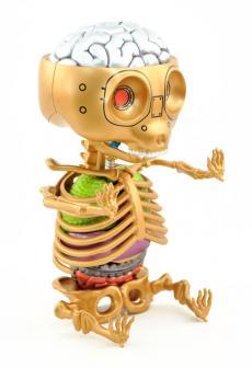 gummibear-anatomy-24.jpg