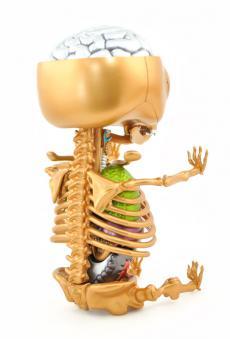 gummibear-anatomy-25.jpg