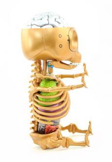 gummibear-anatomy-26.jpg