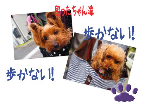 お散歩3(小)