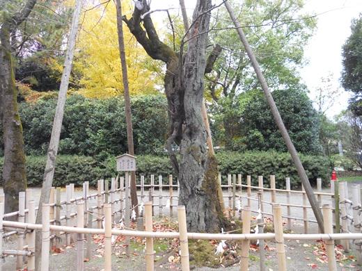 鷲宮神社3