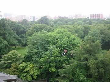 今日の北大植物園(2012年8月16日)