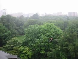 2012年8月6日の植物園