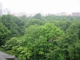 今日7月12日の北大植物園