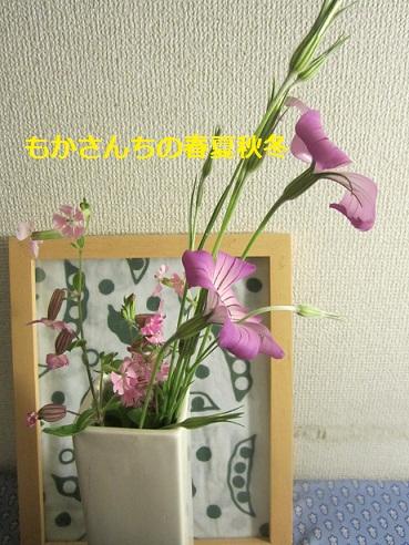 むすこの花1