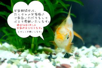 2012.8.15ブログ