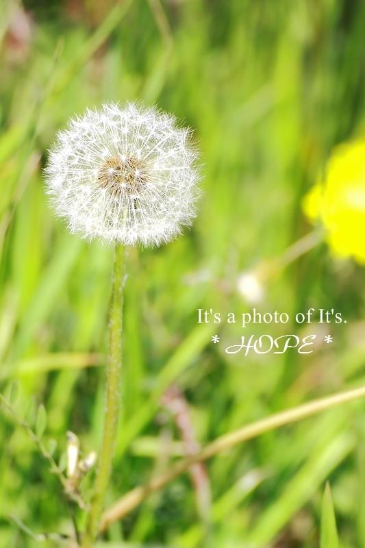 写心の眼-0417_1