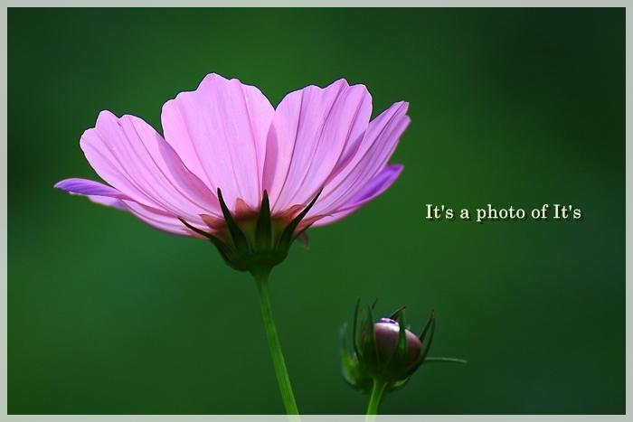 写心の眼-0910_1