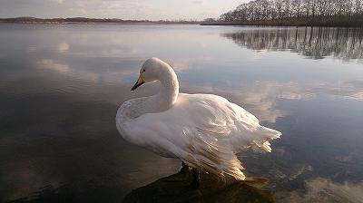 ウトナイ湖 1