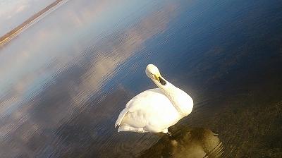 ウトナイ湖 4