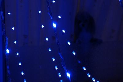 見つめる青色