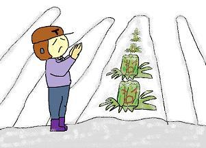白菜は雪の中