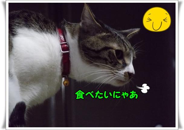 IMGP6987.jpg
