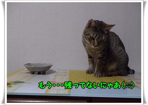 IMGP7319.jpg