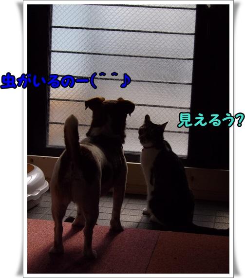 IMGP8148.jpg