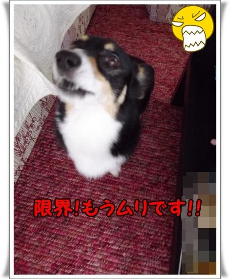 IMGP8429.jpg