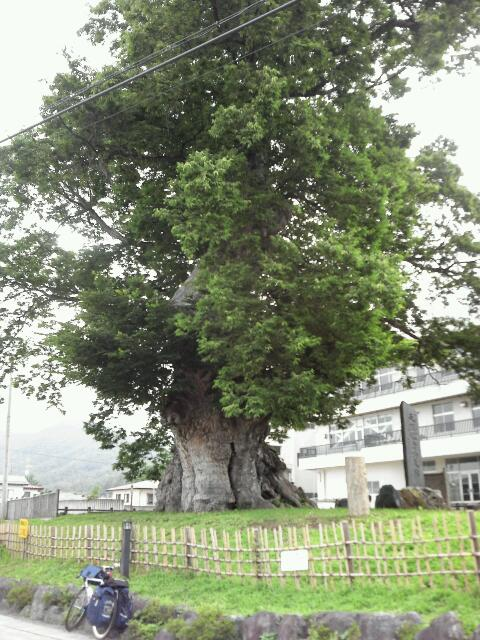 このーきなんのき けやきの木