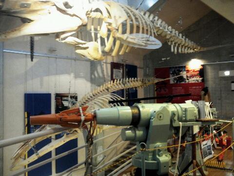 クジラミュージアム