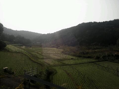 西海 棚田
