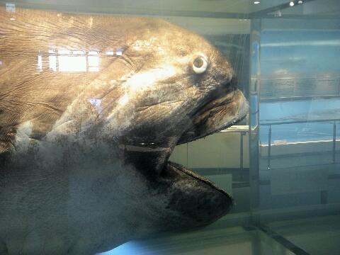 ラリったサメ
