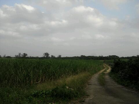 石垣 田舎道②