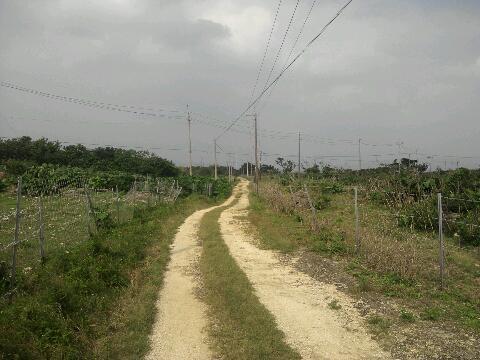 竹富島 田舎道②