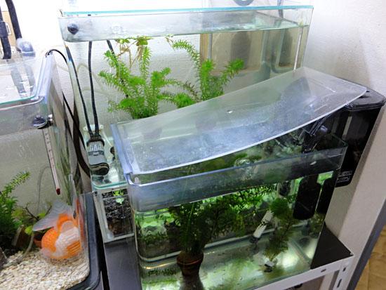 小金魚水槽20121218