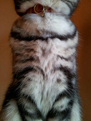 ホワッホワ胸毛