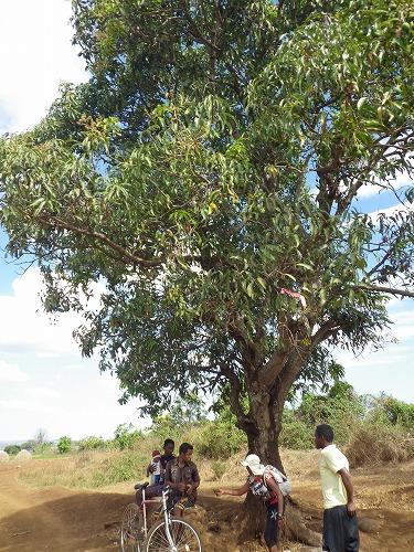 Madagascar (203)
