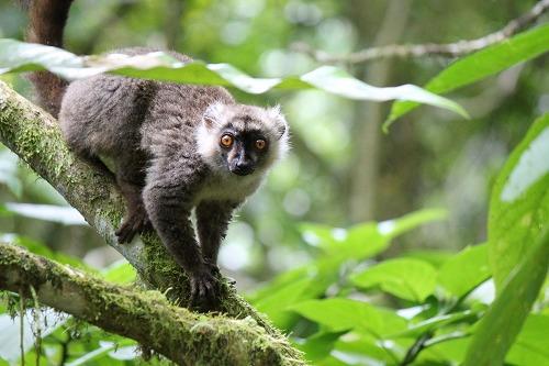 Madagascar (291)