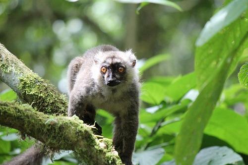 Madagascar (294)