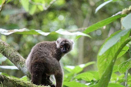 Madagascar (299)
