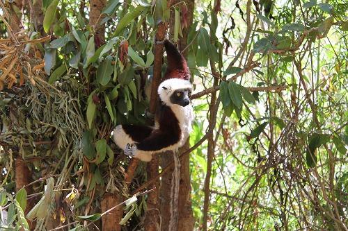 Madagascar (328)