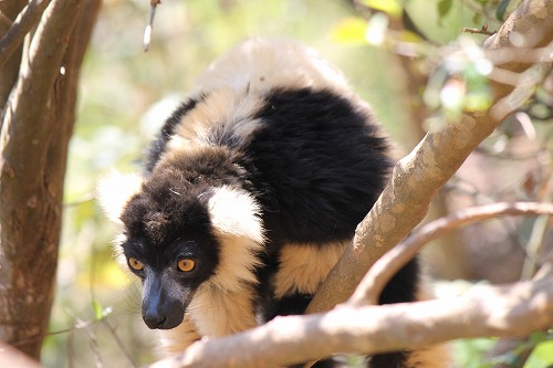 Madagascar (334)
