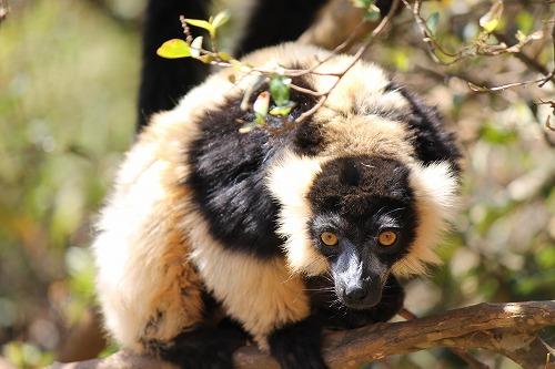 Madagascar (338)