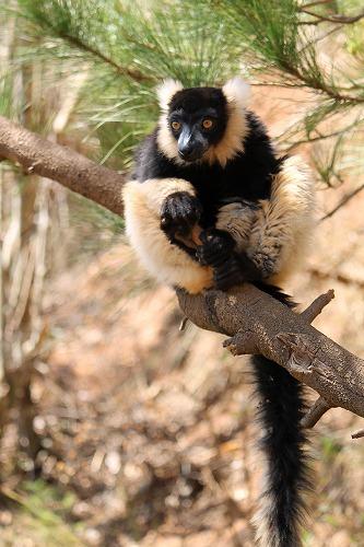 Madagascar (347)