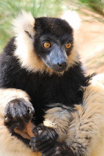 Madagascar (350)