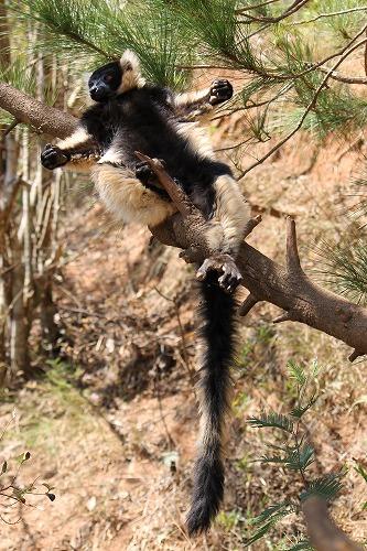 Madagascar (351)