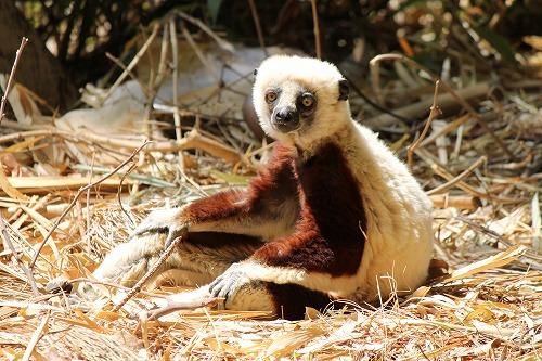 Madagascar (354)