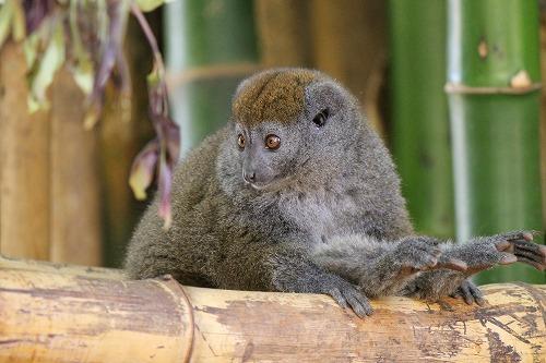 Madagascar (357)