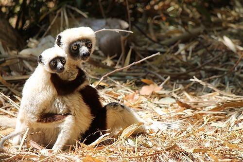 Madagascar (359)