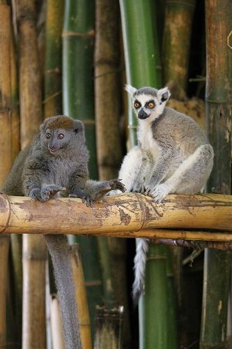 Madagascar (363)