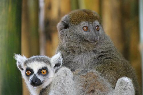 Madagascar (372)