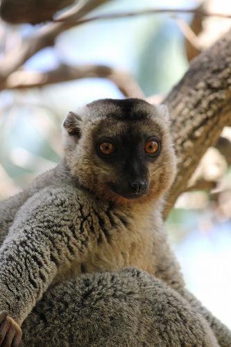 Madagascar (376)