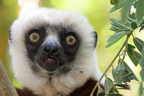 Madagascar (380)